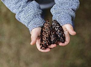 Kinderhände_Tannenzapfen